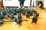 Birds by Maxine Greer
