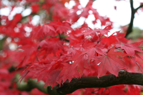 Tree at Leicester Botanic Garden