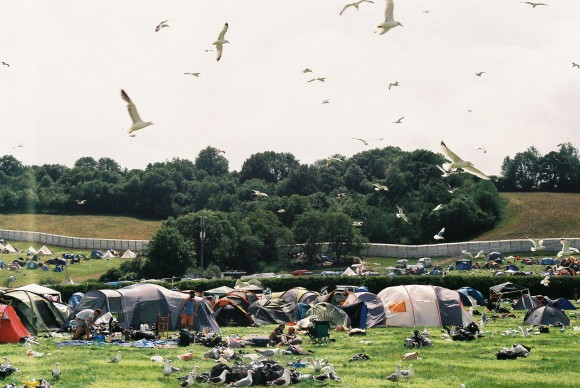 seagulls taking over the campsite