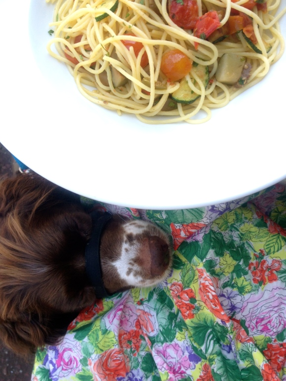 Pasta and spaniel!