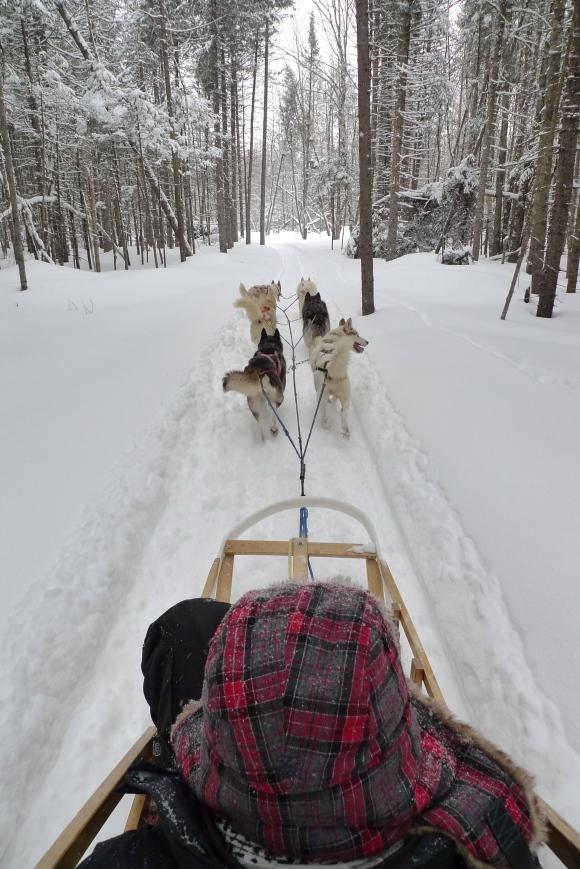 Dog sledging in Quebec