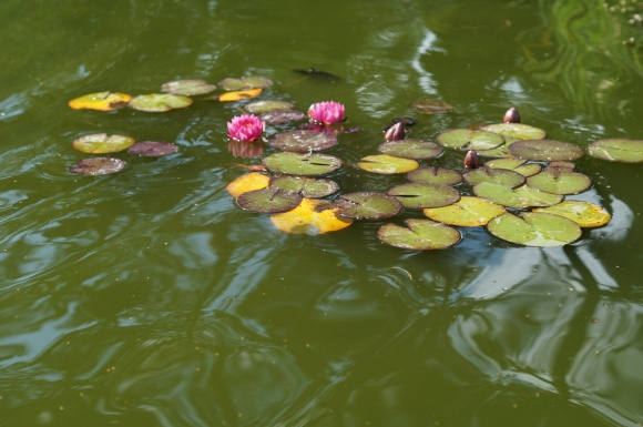lilly pond botanical gardens leicester