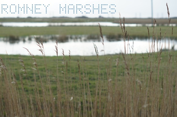 Romney marshes