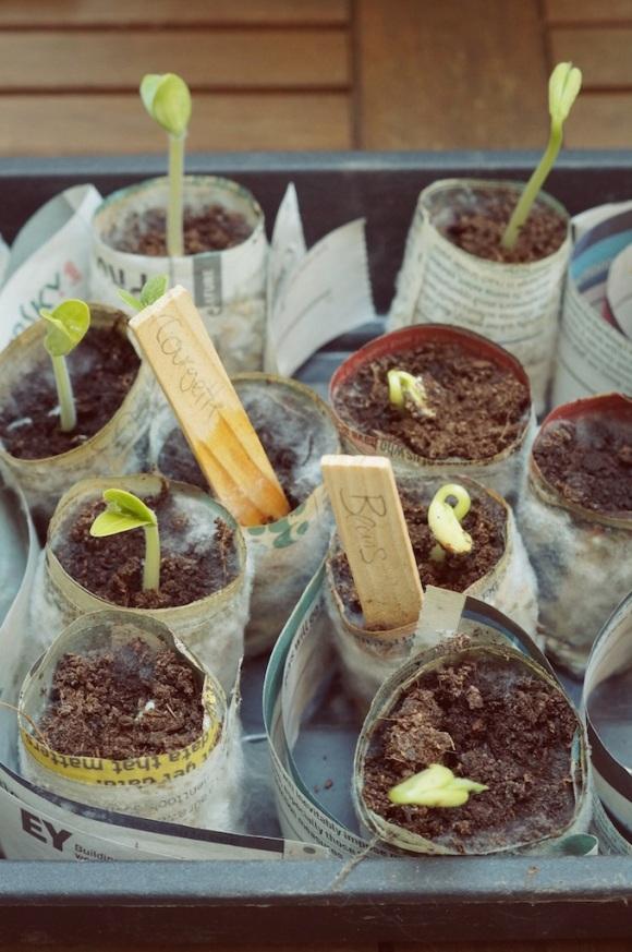 two week old seedlings