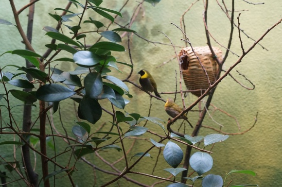little birds, frankfurt Zoo