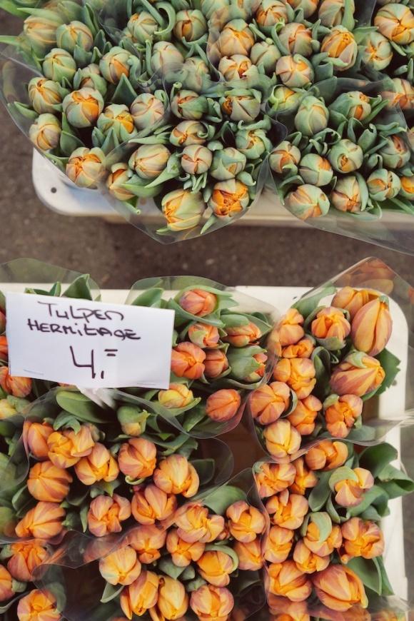 tulpen Hermitage